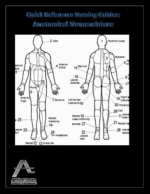 Anatomical Nomenclature